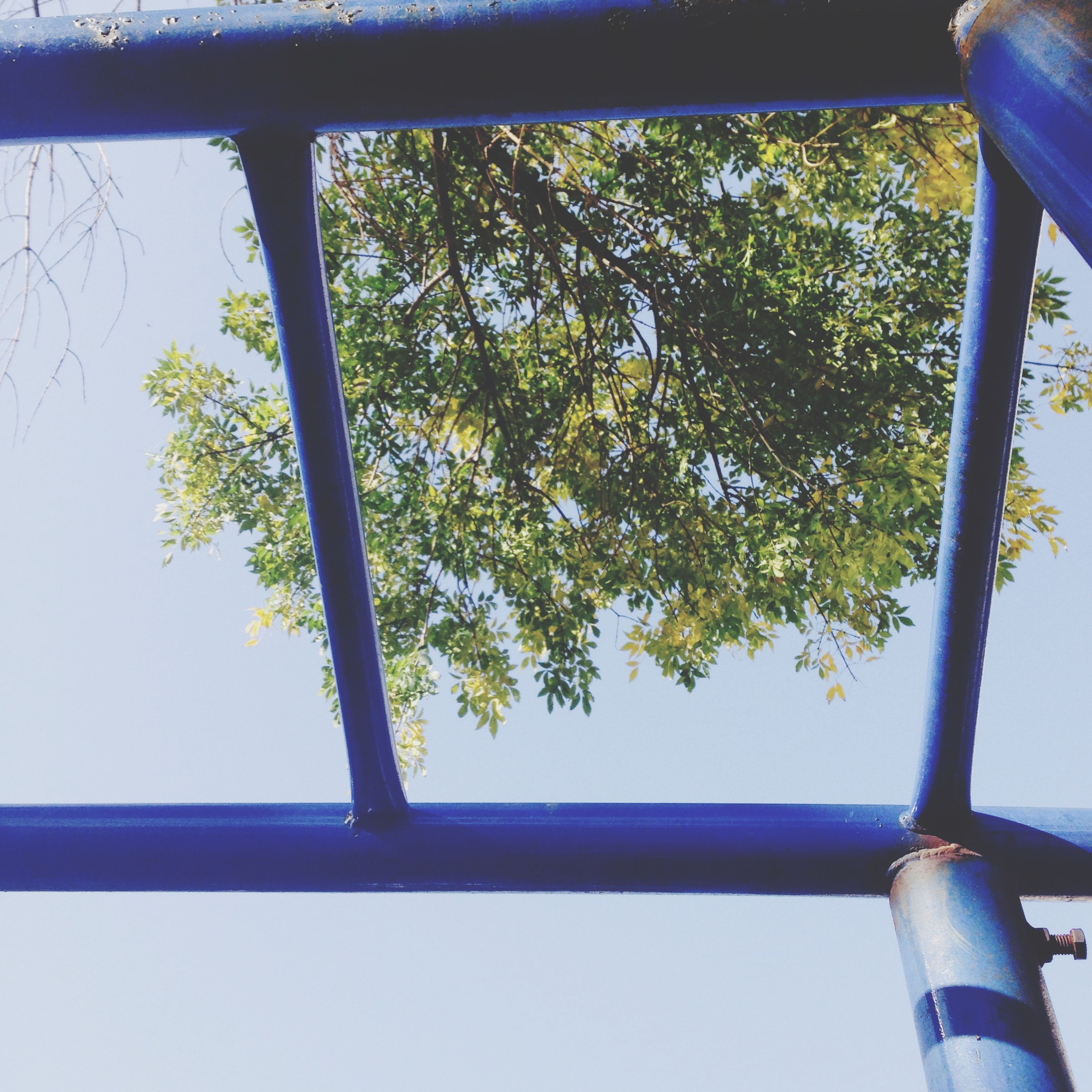 tree, low angle view, blue, metal, railing, clear sky, growth, day, green color, built structure, no people, branch, nature, outdoors, sky, metallic, architecture, safety, pole, protection