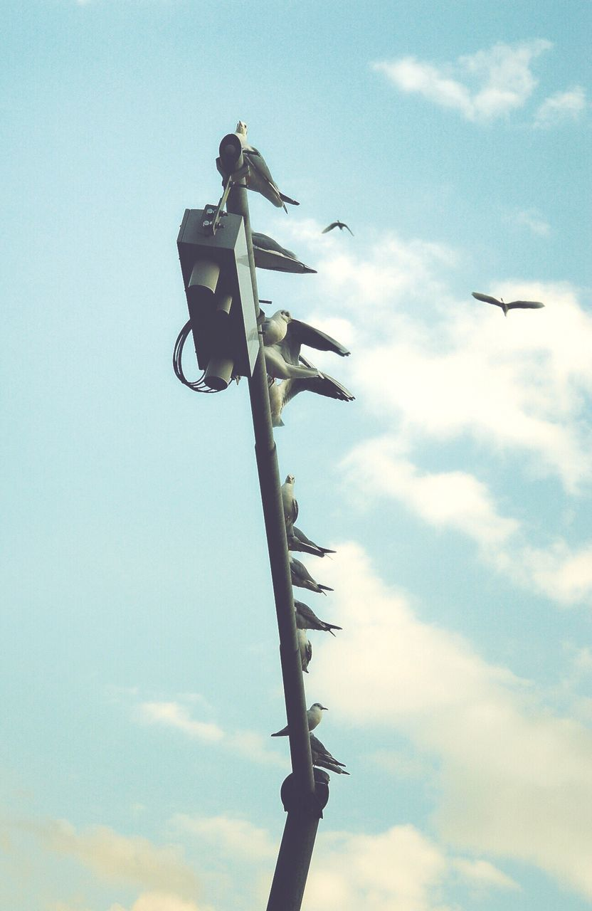 Low Angle View Of Pigeons Perching On Road Sign Against Sky