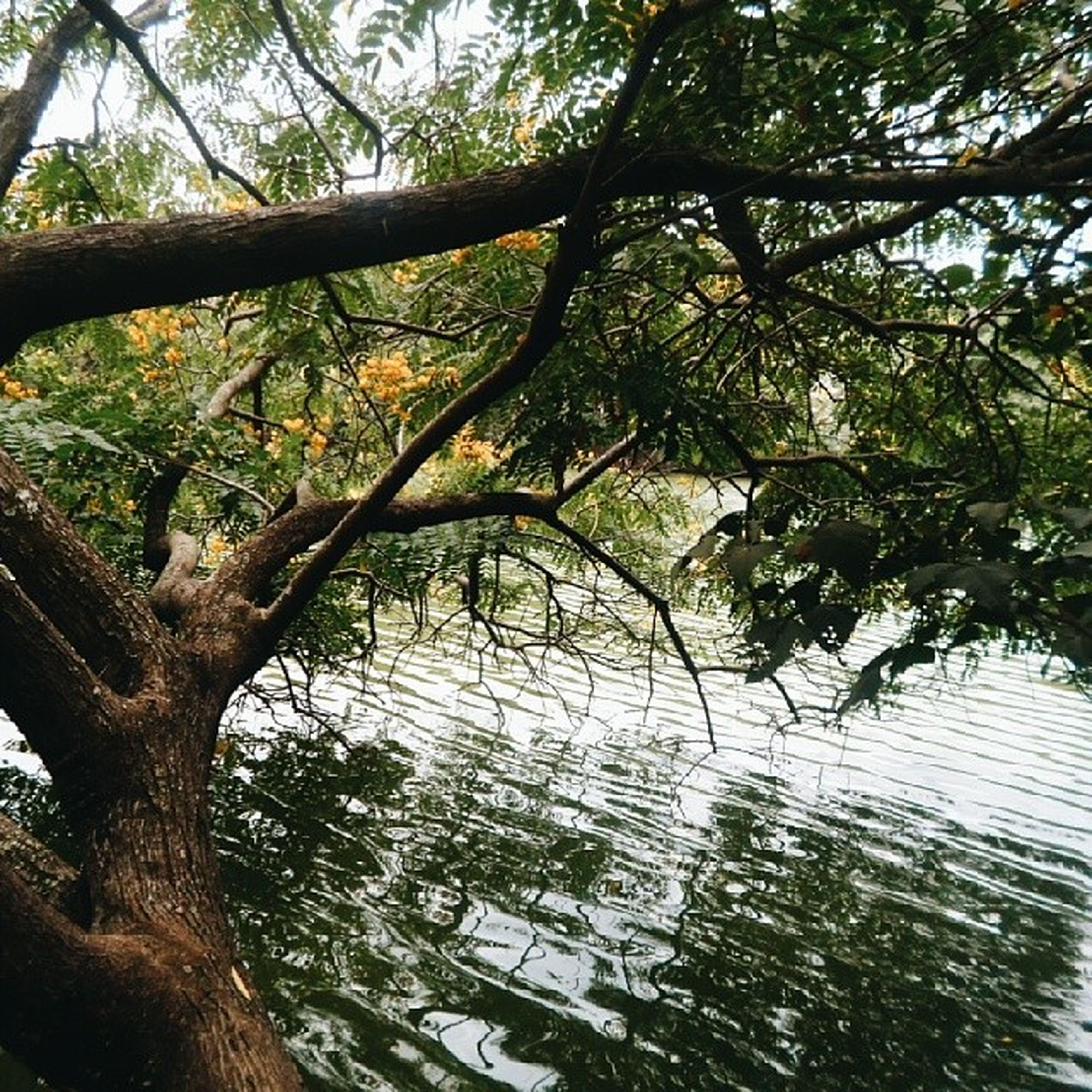 tree, branch, growth, tree trunk, water, tranquility, nature, reflection, beauty in nature, scenics, tranquil scene, green color, day, lake, low angle view, outdoors, sky, no people, sunlight, leaf