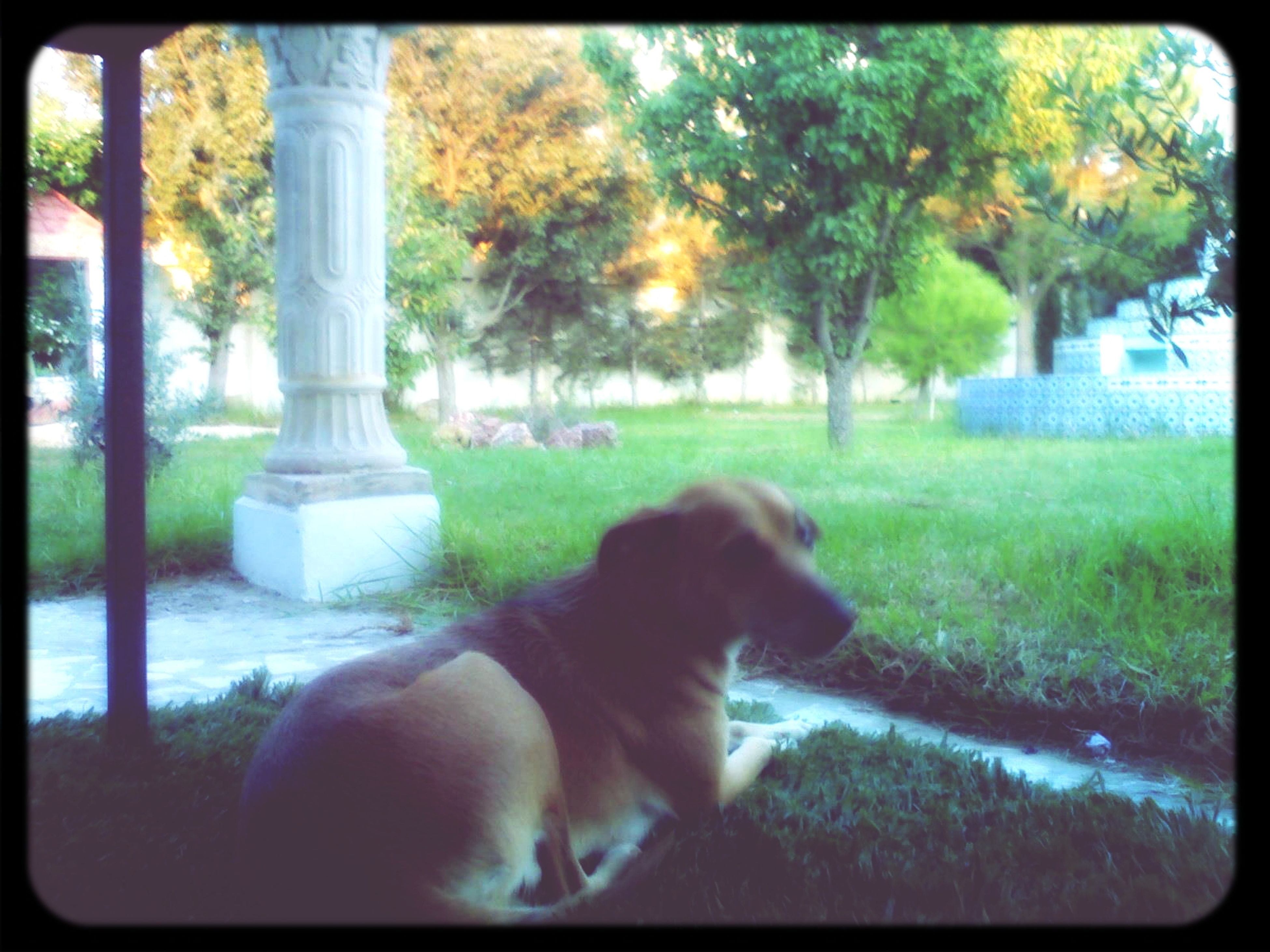 Dog Love Doggy Dog I Love My Dog