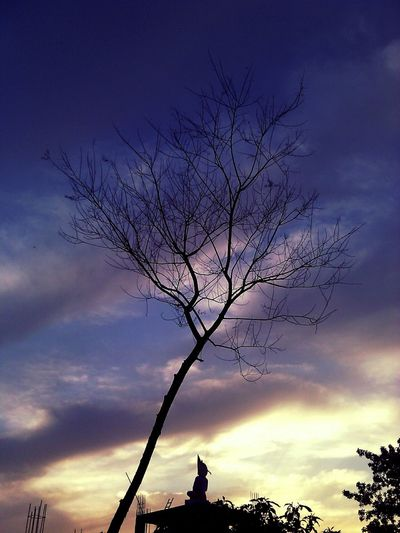 First Eyeem Photo Photography Evening Light Blue Sky Open Edit Tree And Sky Black Tree