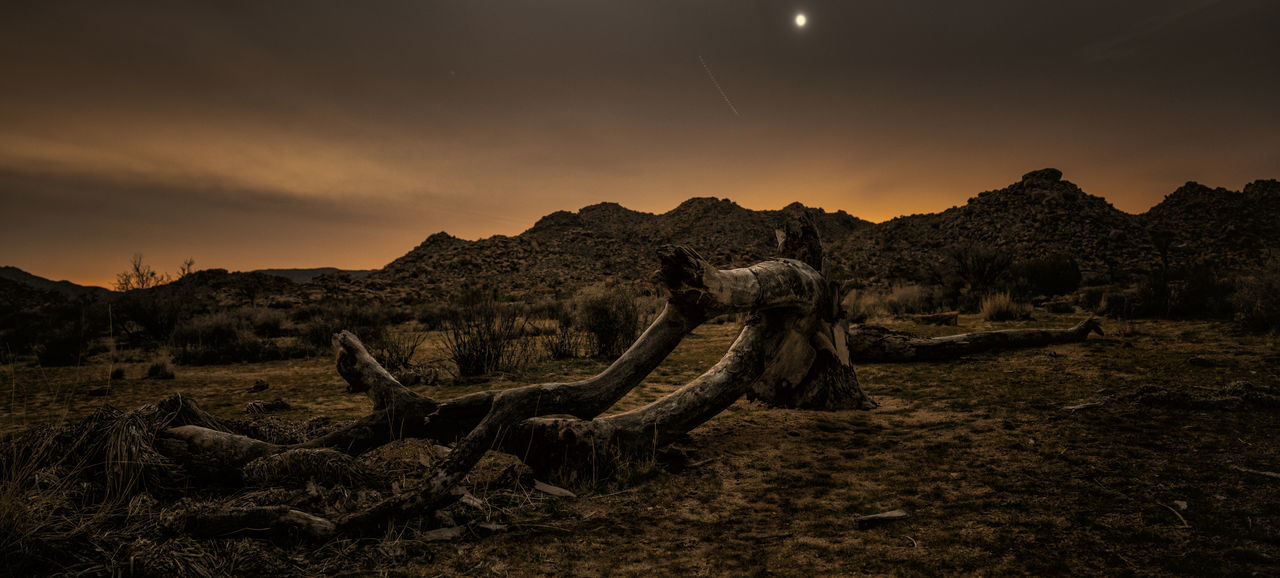 Low light capture inside the Joshua tree national park at night showing dead tree on the ground. California Dead Plant Joshua Tree National Park Landscape Mountain Nature Night Night Photography No People Outdoors Rock - Object Sand Sky
