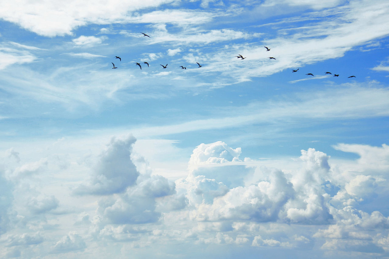flying, cloud - sky, bird, sky, large group of animals, animal themes, animals in the wild, flock of birds, mid-air, nature, no people, migrating, animal wildlife, day, low angle view, beauty in nature, scenics, outdoors, spread wings