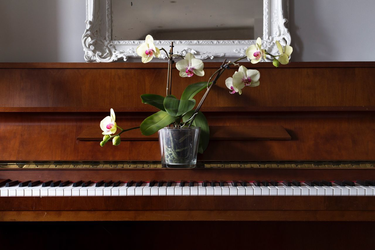 Piano Moments Flower Plant Indoors  Fragility Green Color Home Interior Nature No People Flower Head Piano Day Bouquet Close-up Keyboard Orchid Orchids Zen Tranquility