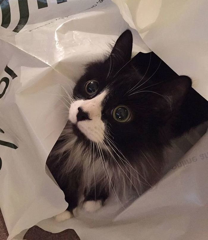 This present wrapping is bloody scary Max Catsofinstagram Cat_of_instagram Fluffy Mouse Cute Instalike Instagood Petstagram Christmas Wrapping Johnlewis Catinabag ScaredyCat Bigeyes