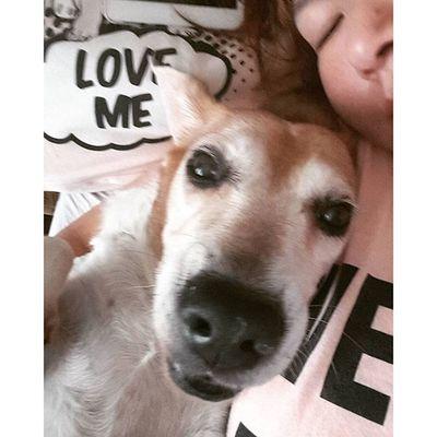 自拍 Mymilinbaby Beagle