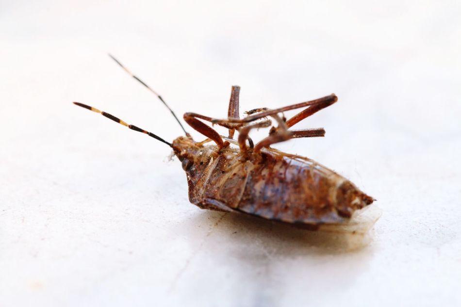 Beautiful stock photos of cockroach, Animal Themes, Bug, Close-Up, Day