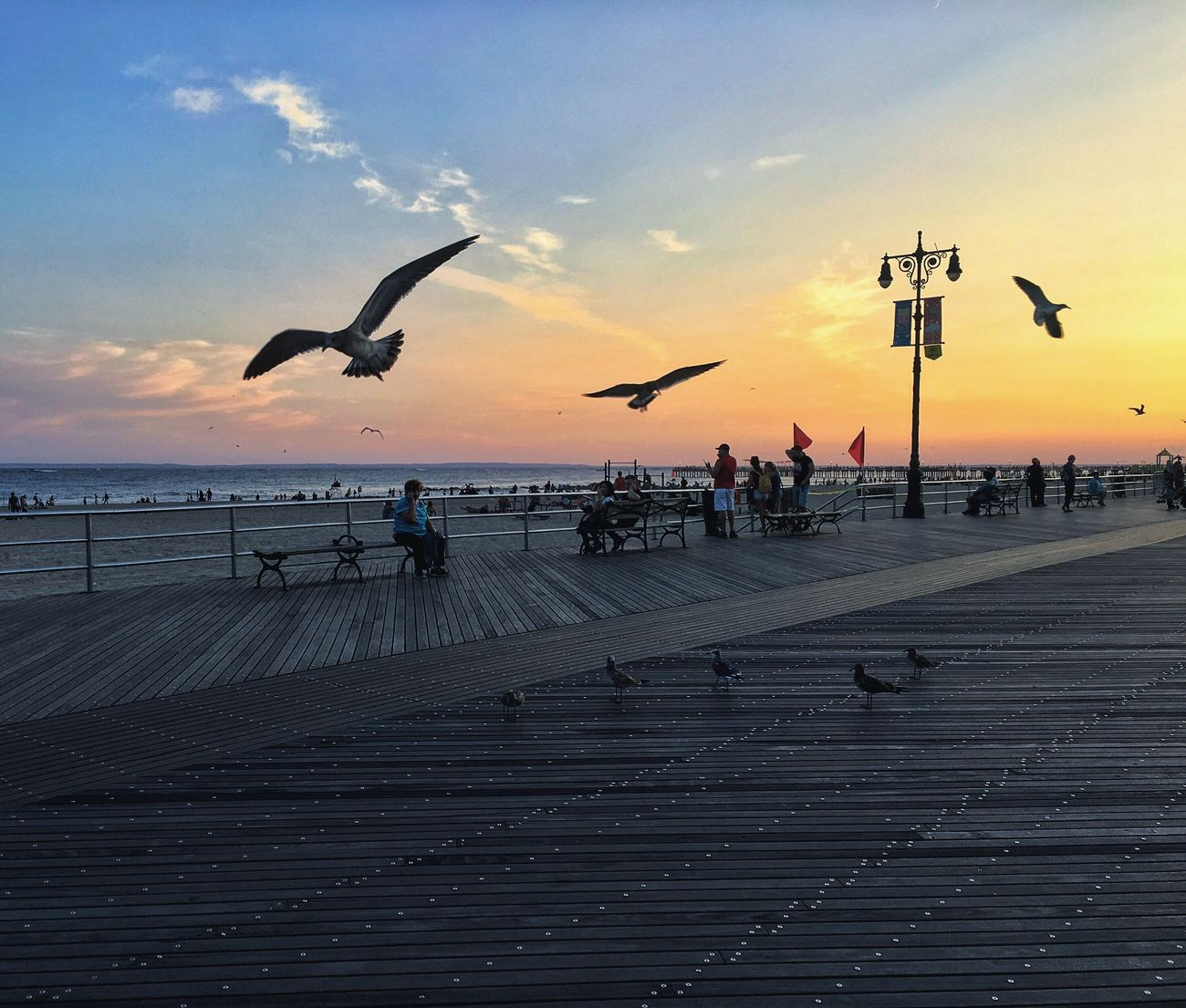 Battle Of The Cities New York New York City Coney Island Brighton Brighton Beach Sunset Beach Ocean Ocean View Bird Sky Pier View Tourism Vacation Good Times USA