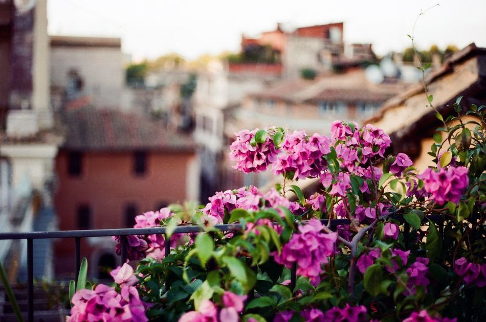 Roma Analog Depthoffield Filmcamera Filmisnotdead Canon AE-1 Flowers 35mm Film Bokeh Balcony Trestevere Italy Europe Apartment Terrace Beatiful View Sunny Day
