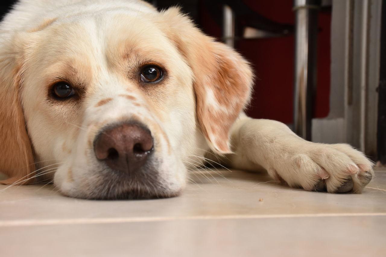 Animal Themes Dog Dogs Dogs Of EyeEm Dog❤ Lookatme One Animal Pets Whitedog First Eyeem Photo