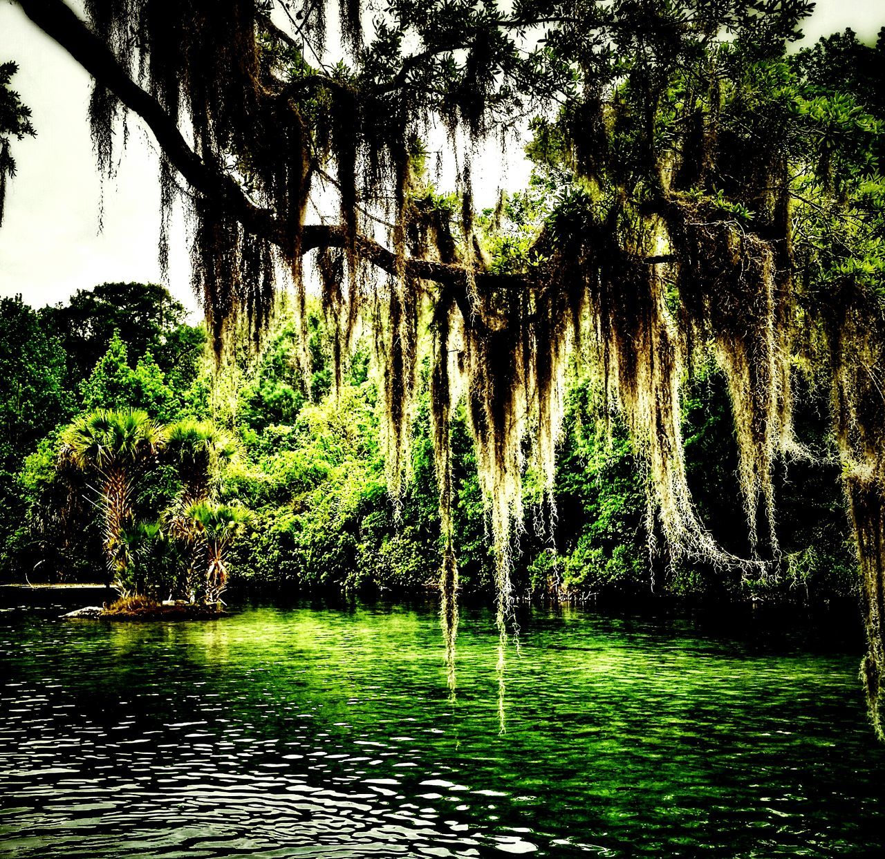 Salt Springs, FL Springs Saltsprings Florida Nature Landscape Tree Water Check This Out