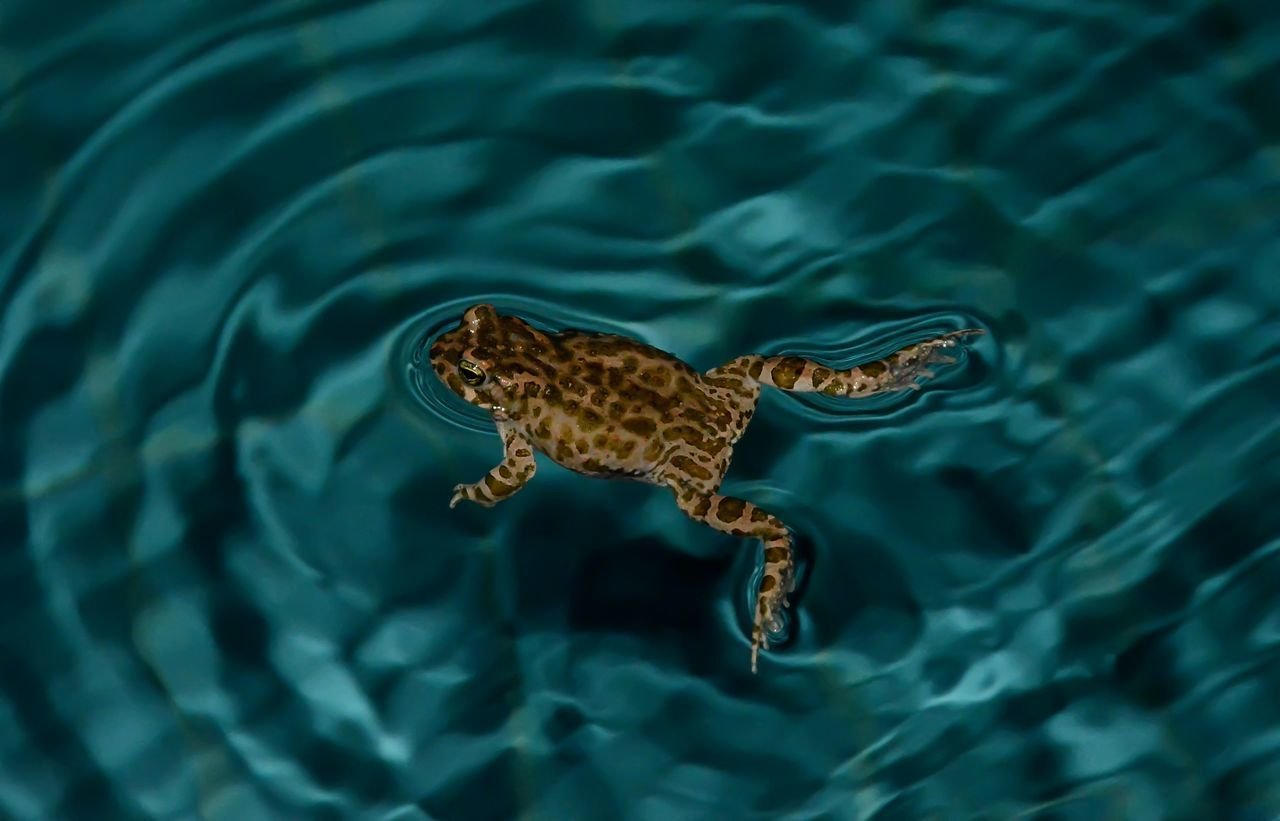 Animal Themes Animal Wildlife Animals In The Wild Close-up Day Floating On Water Light Reflection On Water Nature Night Photography One Animal Outdoors Swimming Water