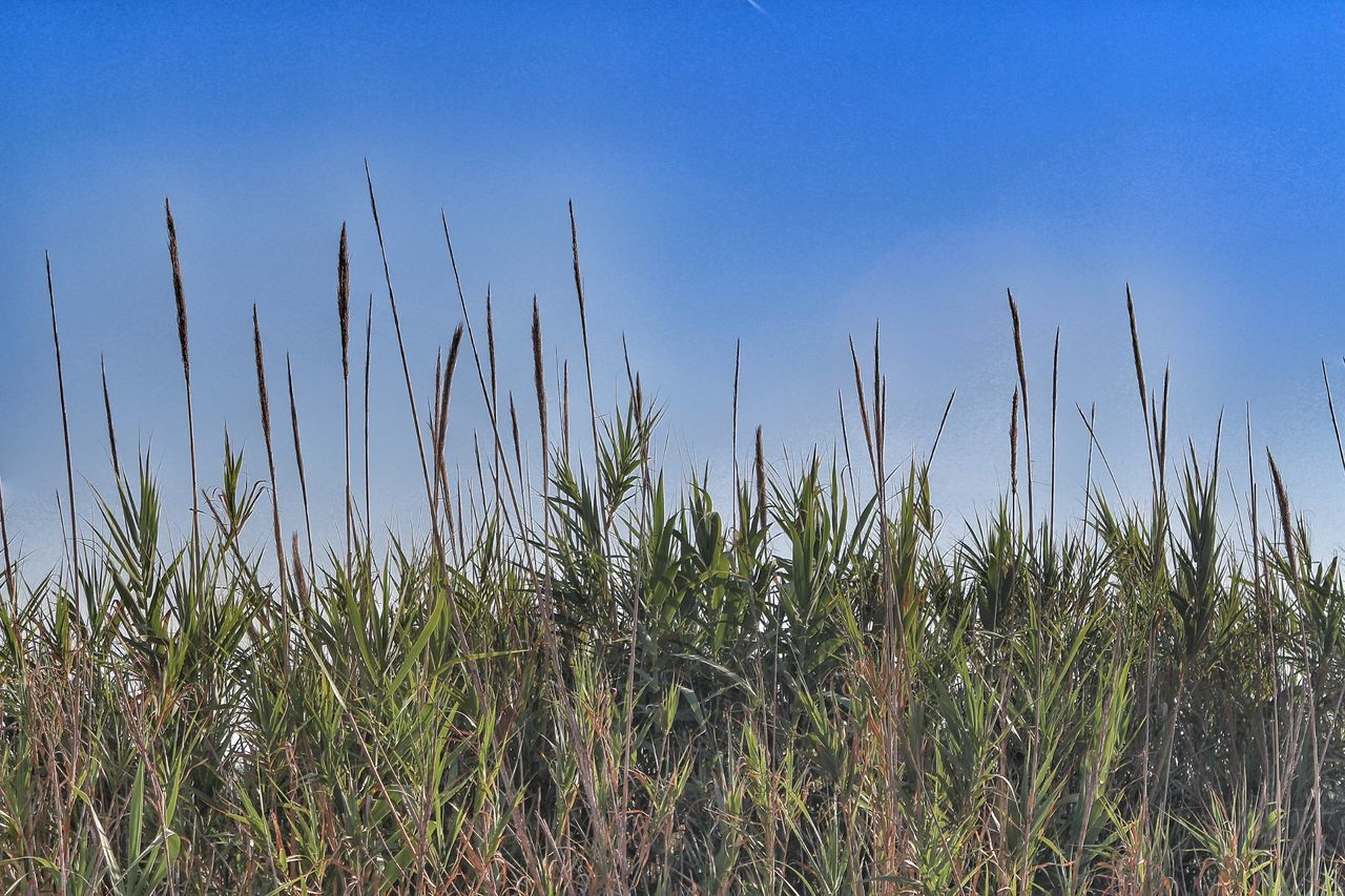 Long tall grass Taking Photos Non-urban Scene Outdoors Beauty In Nature I LOVE PHOTOGRAPHY Popular Photo First Eyeem Photo Photography Hanging Out Popular Photos Vacations Tranquil Scene Selective Focus Nature Seclusion No People Private