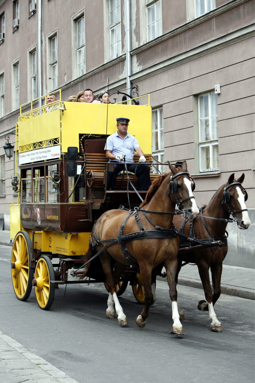 horse, mammal, working animal, domestic animals, building exterior, horse cart, mode of transport, real people, architecture, street, men, horsedrawn, transportation, built structure, day, outdoors, city