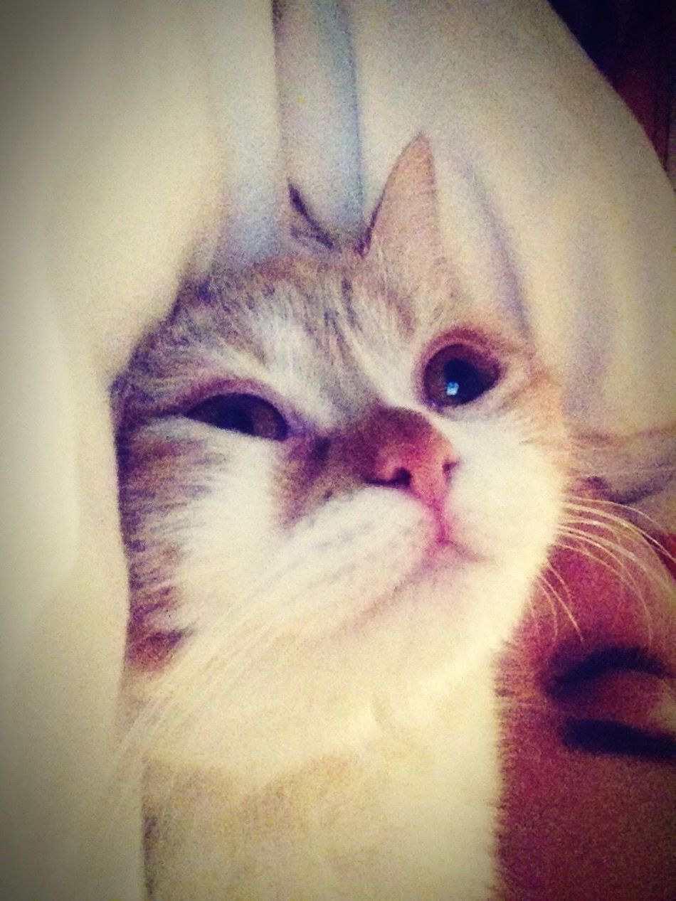 Cat Jiyan Kedi Sleeping
