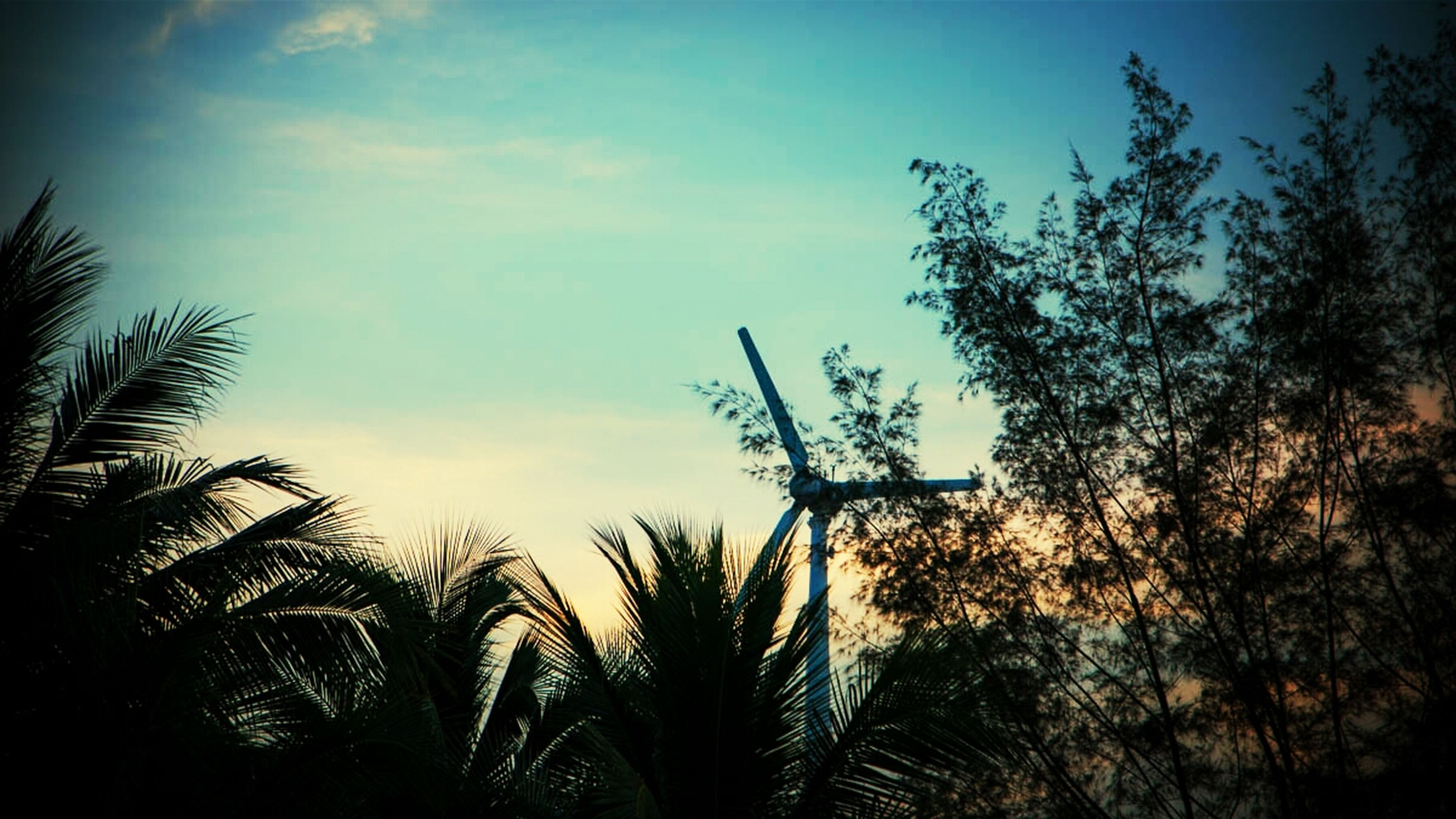 low angle view, growth, sky, silhouette, sunset, palm tree, tree, nature, cloud - sky, beauty in nature, plant, tranquility, cloud, dusk, outdoors, no people, leaf, scenics, sunlight, branch