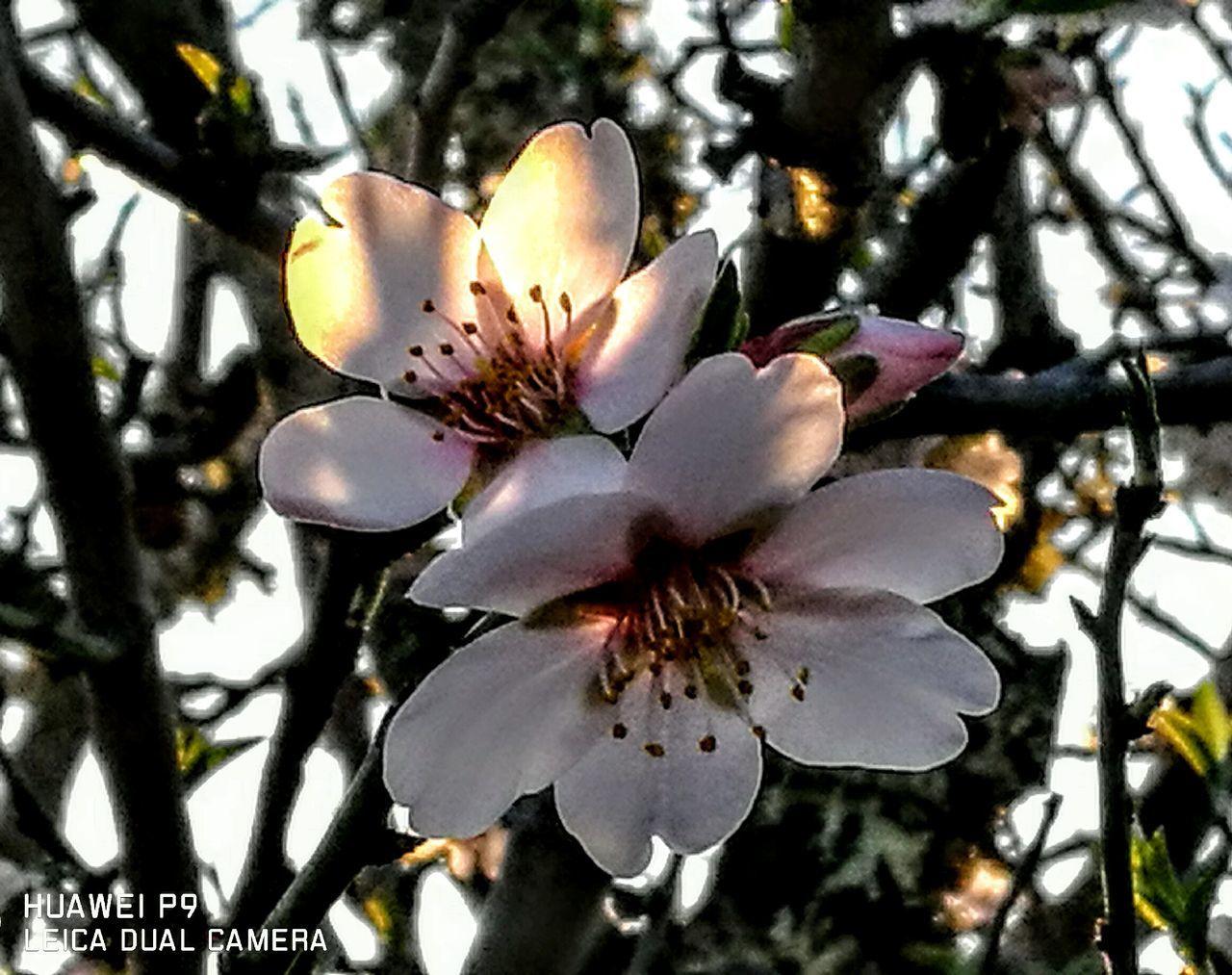 Mandelblüte auf Mallorca... Growth Beauty In Nature Nature Flower Plant Outdoors Freshness Tree Originalpicture GetbetterwithAlex PalmaDiMaiorca Blossom Nostalgic Scene Tranquil Scene