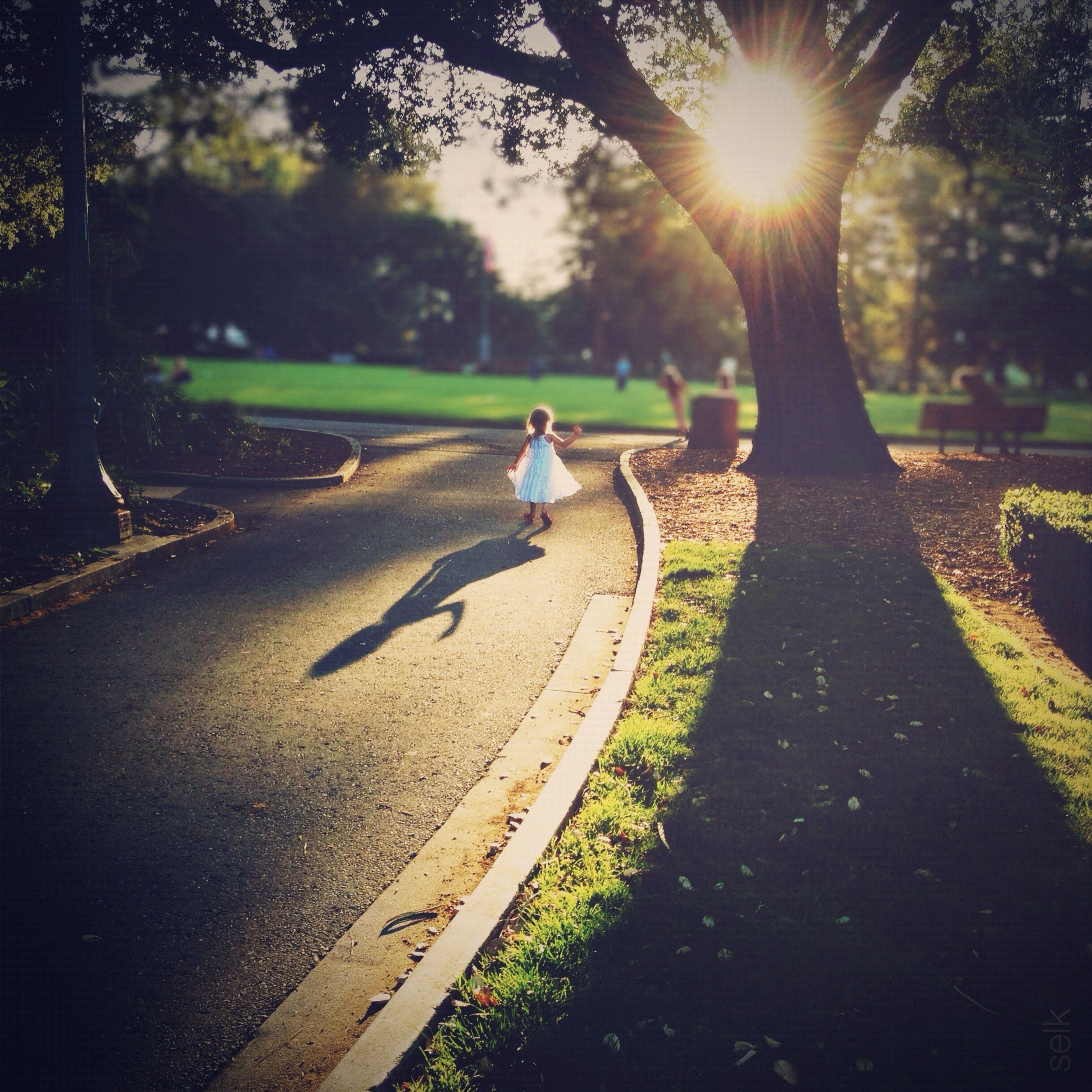 sunlight, shadow, full length, bird, road, street, animal themes, one person, one animal, tree, outdoors, mid-air, day, park - man made space, sunny, grass, walking, side view, nature, wildlife