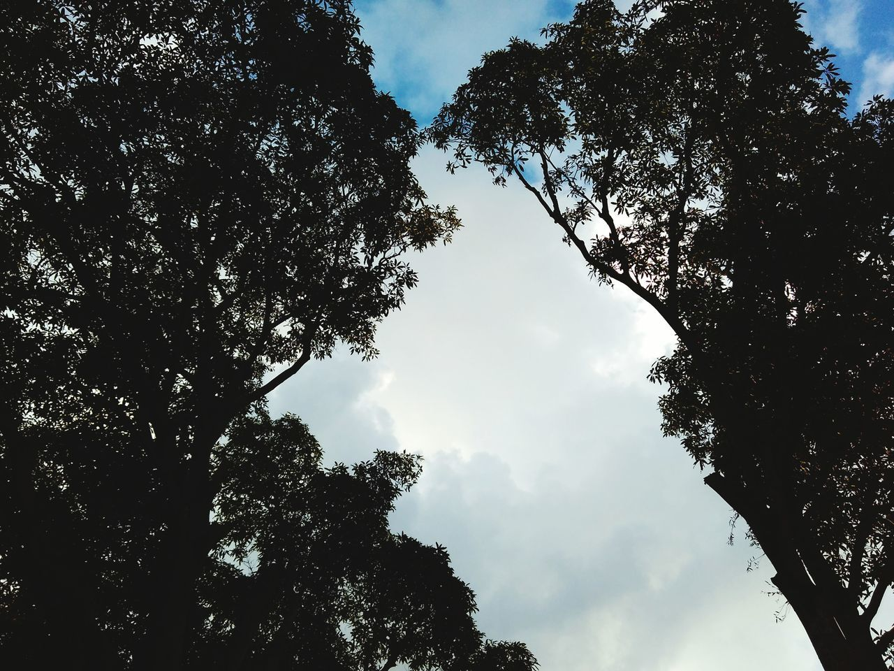 tree, low angle view, sky, nature, cloud - sky, beauty in nature, day, no people, growth, outdoors, silhouette, branch, tranquility, scenics, forest, height