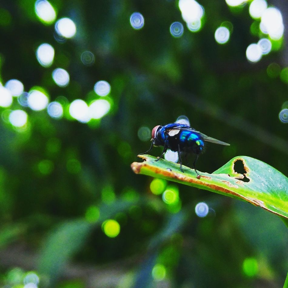 The unseen colour First Eyeem Photo Insect Insect Photography Nature Rainbow Colors Miniscule