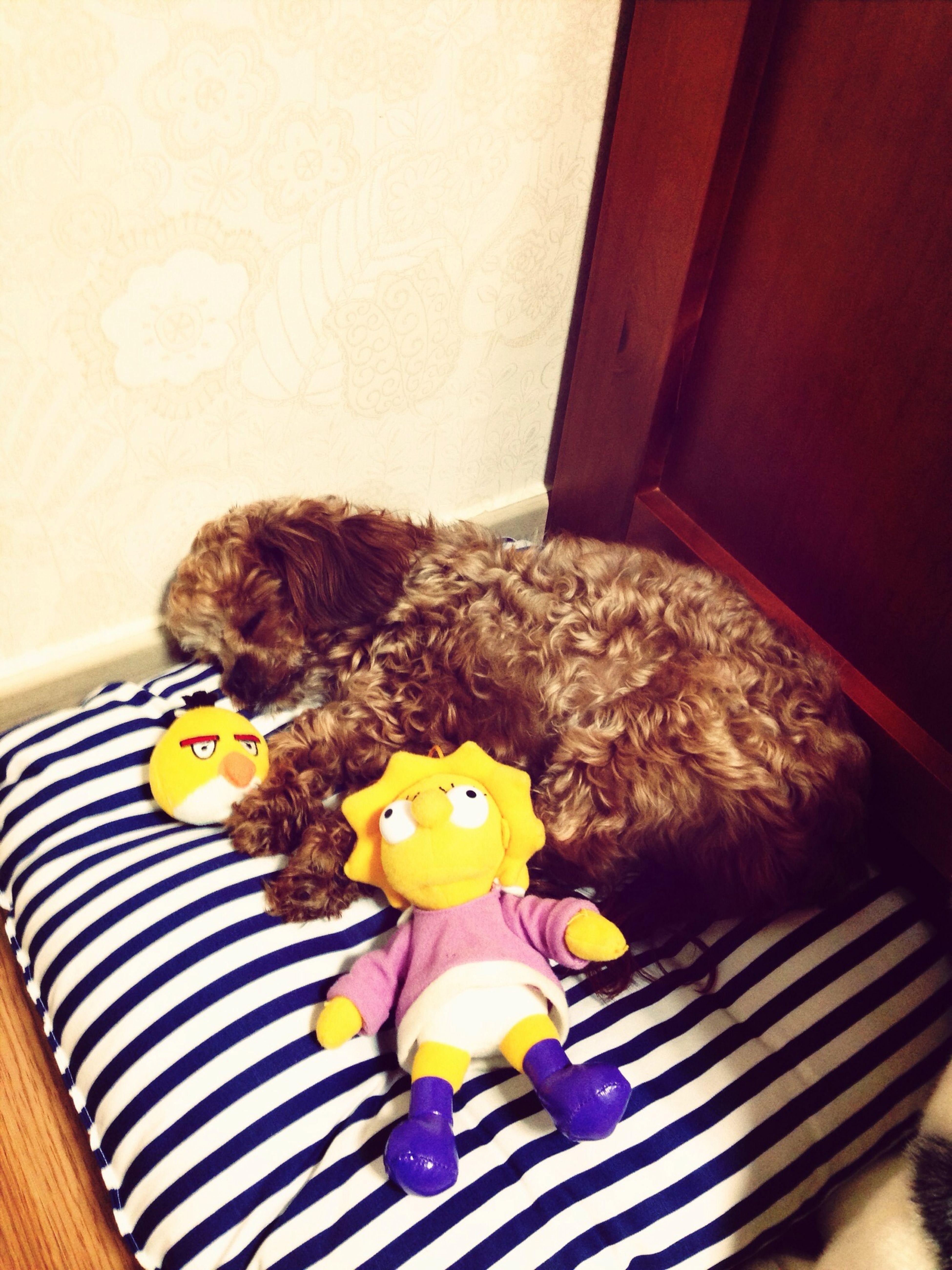 Dog Sleeping Dog Love