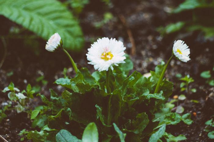#film #flowers #Paris #park #Sunday Beauty In Nature Growth Nature Springtime