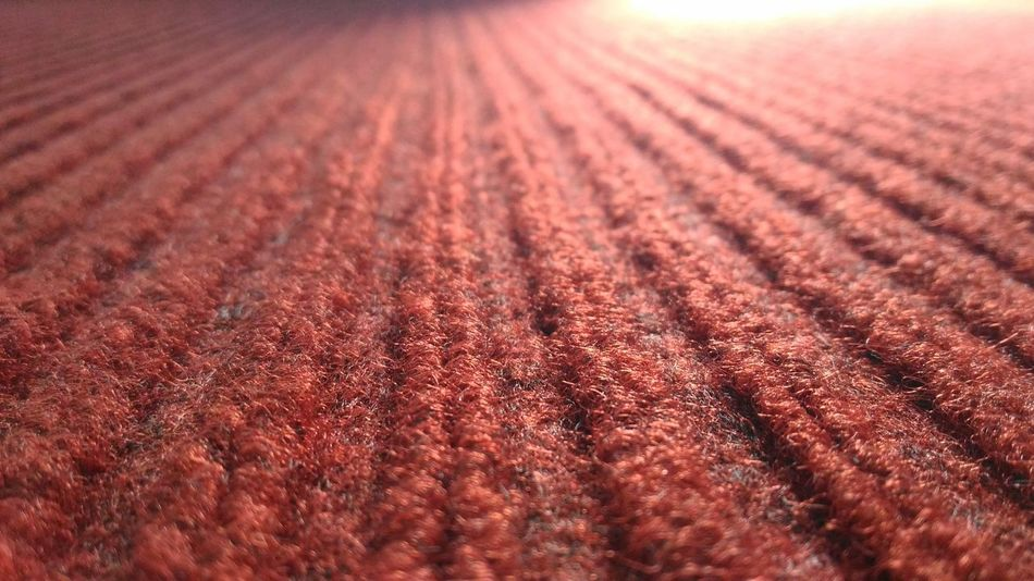 Red Red Color Red Carpet No People Growth Day Close-up Backgrounds Mat EyeEmBestPics Eyeemphotography EyeEm Gallery EyeEm EyeEm Simple & Clean Simple Simple Photography Simple Beauty Freshness EyeEm Best Shots Eyeem Different Common Indoorsphotography Millennial Pink