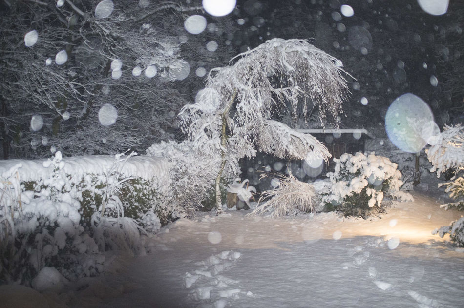 Beauty In Nature Christmas Cold Temperature Frozen Garden At Night Heavy Snow On Trees Ice Nature Night No People Season  Seasons Snow Snowflakes Illuminated By Flashlight Snowing Tranquility Weather Winter