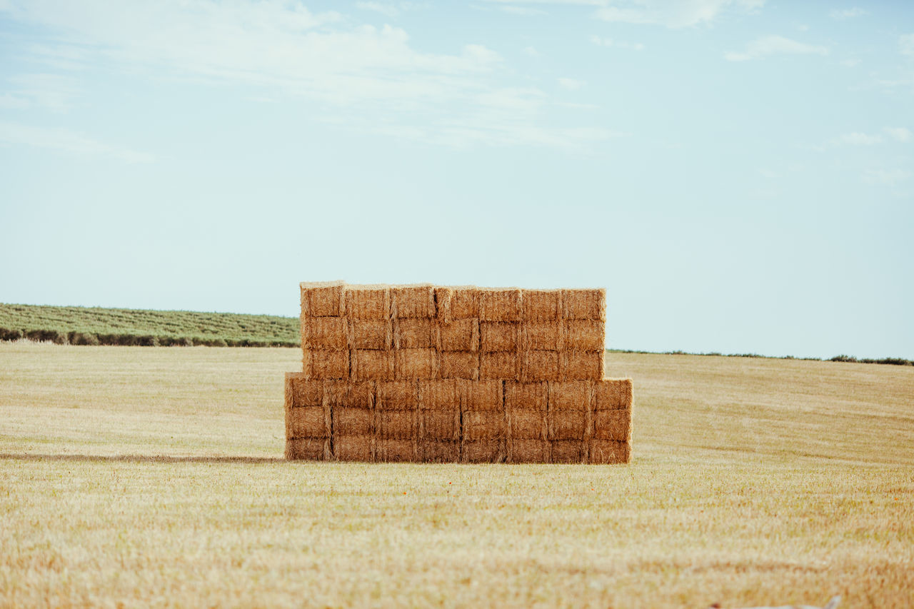 Agriculture Agriculture Day Farm Farm Life Field Grass Growth Hay Bale Landscape Livestock Nature No People Outdoors Rural Scene Sky Tranquility Wheat Wheat Field