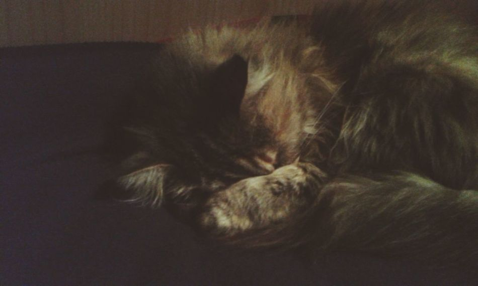 🐱💞 MyLove❤ Beautifulcreature Cat Aqualcunodafastidiolaluce🙈