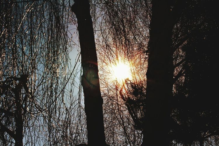 EyeMe Best Shot - Landscape Trees Collection Sunshine ☀ Eyemphotography Eyeembestshots Eyeembestedits Eyeem Follow #f4f #followme #TagsForLikes #TFLers #followforfollow #follow4follow #teamfollowback #followher #followbackteam #followh Eyem Best Shots Nature_collection Eyemphotography Beautiful Nature Love Tags Follow4follow
