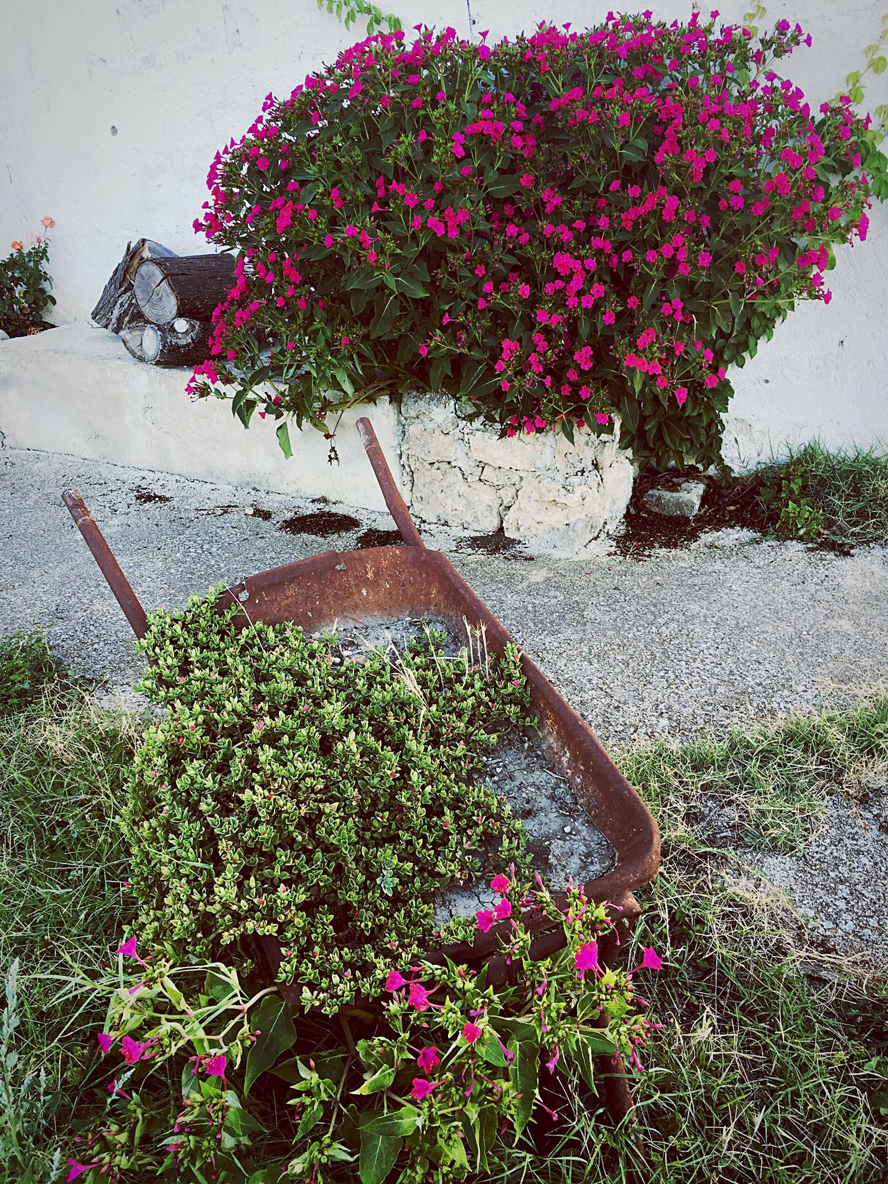Italy Apúlia Puglia South Italy Countryside Detail Flowers Nature Masseria Agritourism