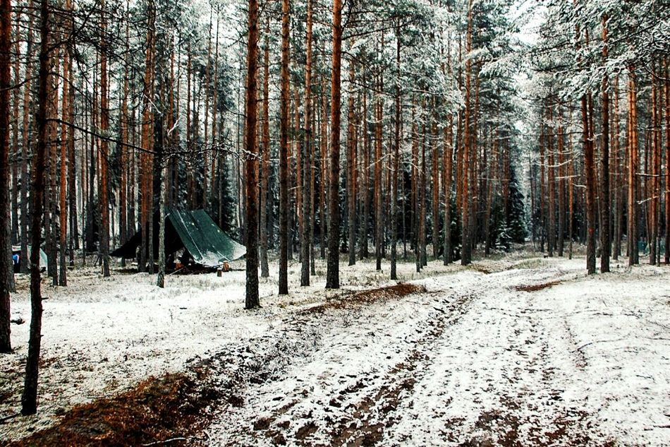 "Photo made with phone ""Samsung Galaxy S3""Samsung Galaxy S3 VelikiyNovgorod Velikiy Novgorod Day Snow ❄ Snow No People Hike Snowy Snowy Days... Snowyday Wood Woods Wood Art Forest Forest Photography Forest Floor The City Light"