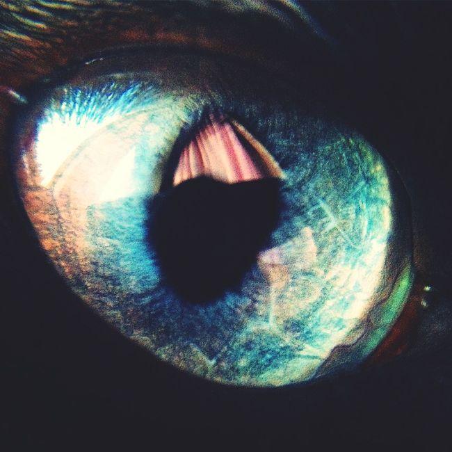 Beautiful красота красиво красотарядом ростов Cat Eye Blue Eyes Ростов-на-Дону Hello World