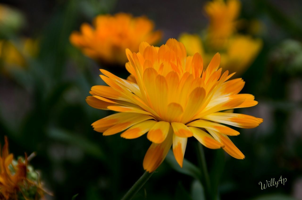 flower, freshness, petal, fragility, growth, flower head, close-up, yellow, beauty in nature, plant, in bloom, nature, vibrant color, focus on foreground, springtime, blossom, botany, day, yellow color, single flower, outdoors, bloom, blooming, growing, uncultivated, wildflower, softness