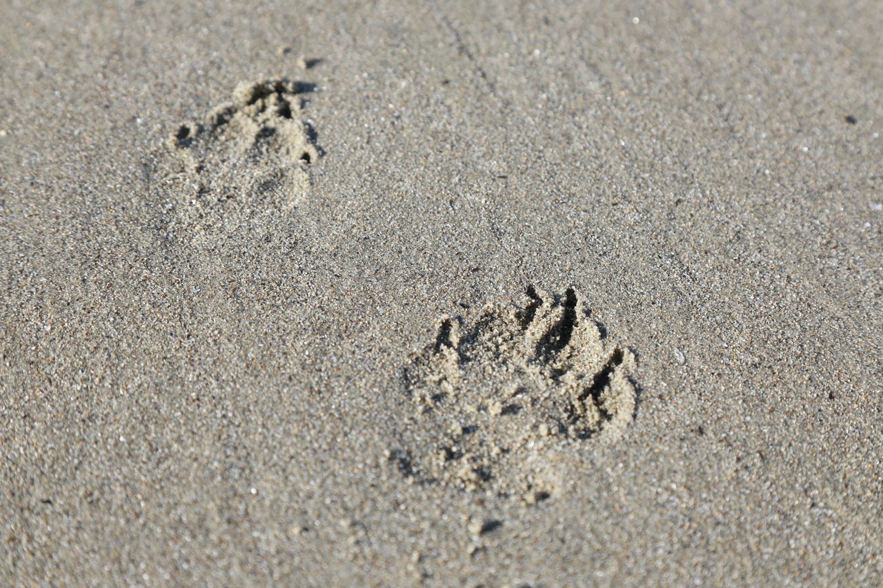 beach, sand, footprint, paw print, shore, day, animal track, high angle view, outdoors, nature, no people, sunlight, close-up, track - imprint
