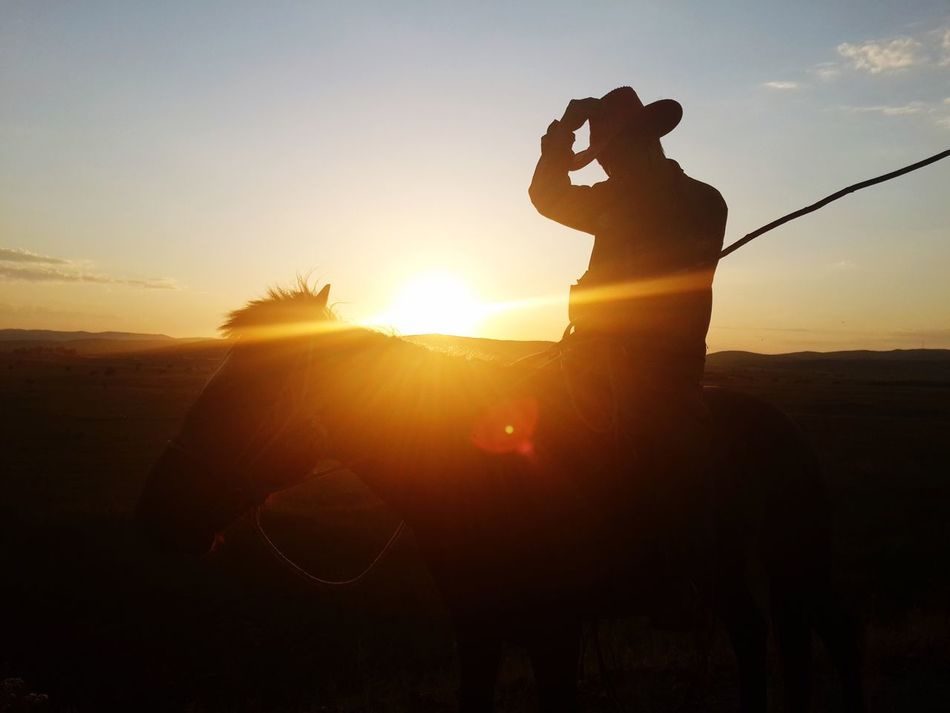 Beautiful stock photos of cowboy, Cowboy, Horse, Horseback Riding, One Animal