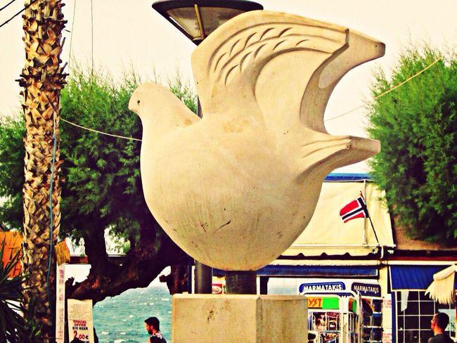 Holyday Creta Fat Bird