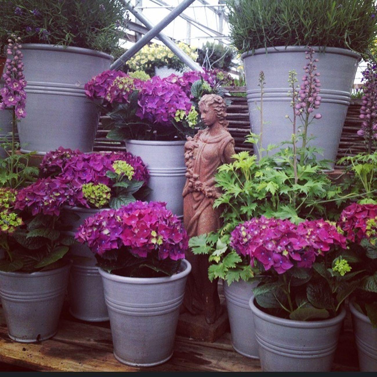 Relaxing Gardening Great Atmosphere
