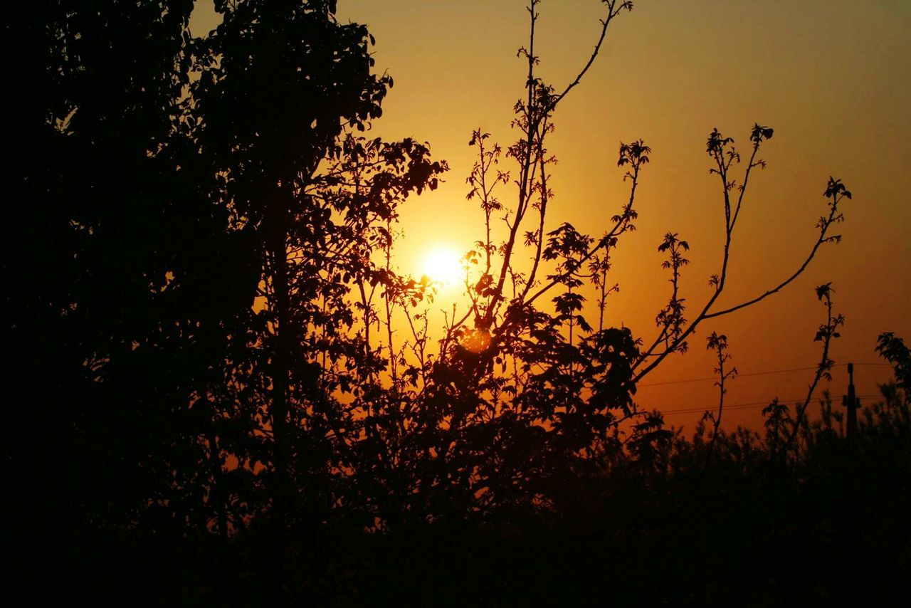 sunset, nature, growth, silhouette, tree, beauty in nature, tranquility, scenics, tranquil scene, sun, plant, flora, outdoors, no people, vegetation, summer, sky, flower