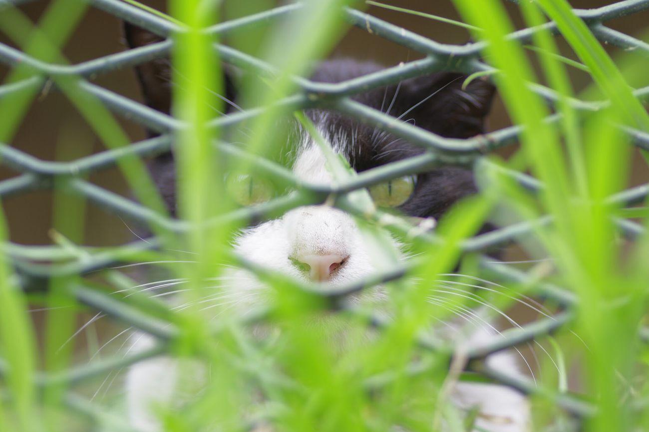 eyeemではエロキャラでもやろうかとしてたら思いの外俺を知ってる人が居てあえなく真面目キャラ(でもないか) Cat Lovers Banned Orz
