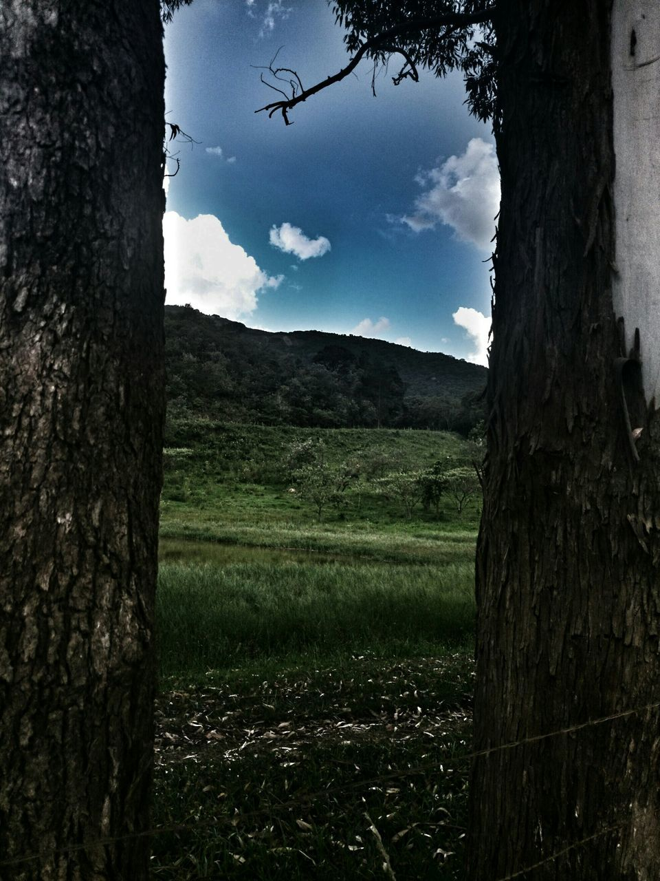 Field Seen Through Trees