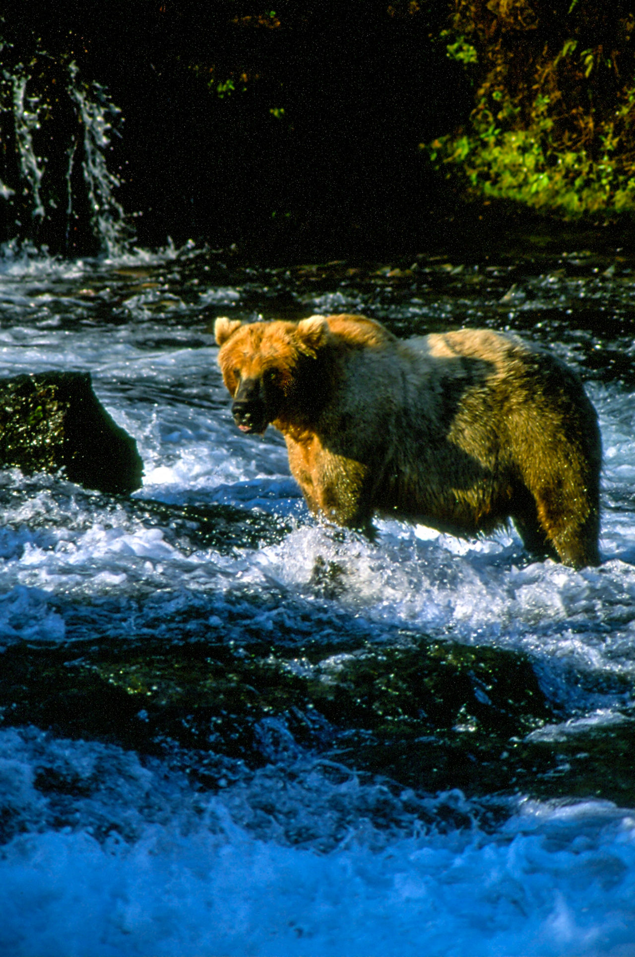 Alaska adventure Alaska Bear Beauty In Nature Brooks Falls Day Flowing Flowing Water Idyllic Katmai National Park Motion Nature No People Non Urban Scene Non-urban Scene Outdoors Rock Rock - Object Rock Formation Scenics Stream Tranquil Scene Tranquility Water