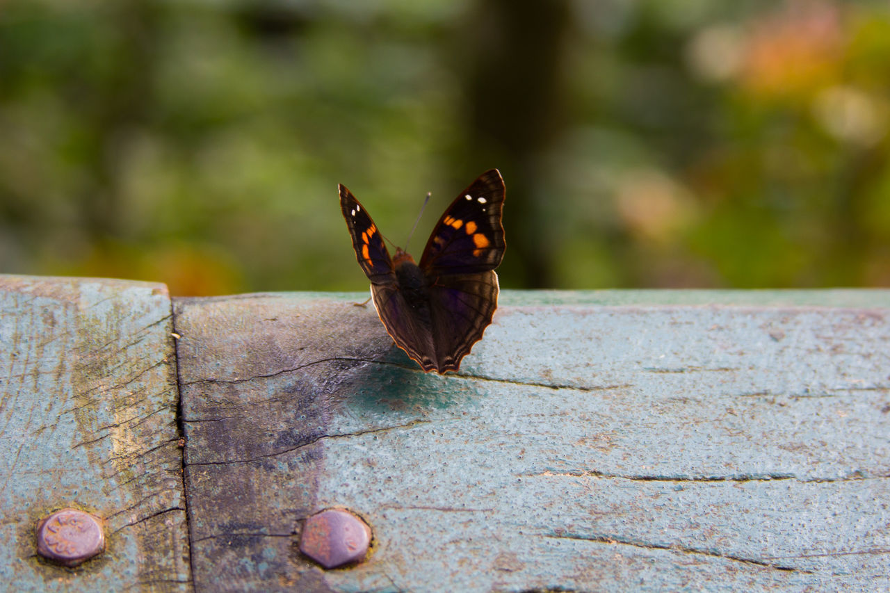 Animal Themes Animal Wildlife Animal Wing Animals In The Wild Butterfly Butterfly - Insect Close-up Colorful Day Full Length Insect Nature Nature No People One Animal Outdoors Park, Perching Wood First Eyeem Photo