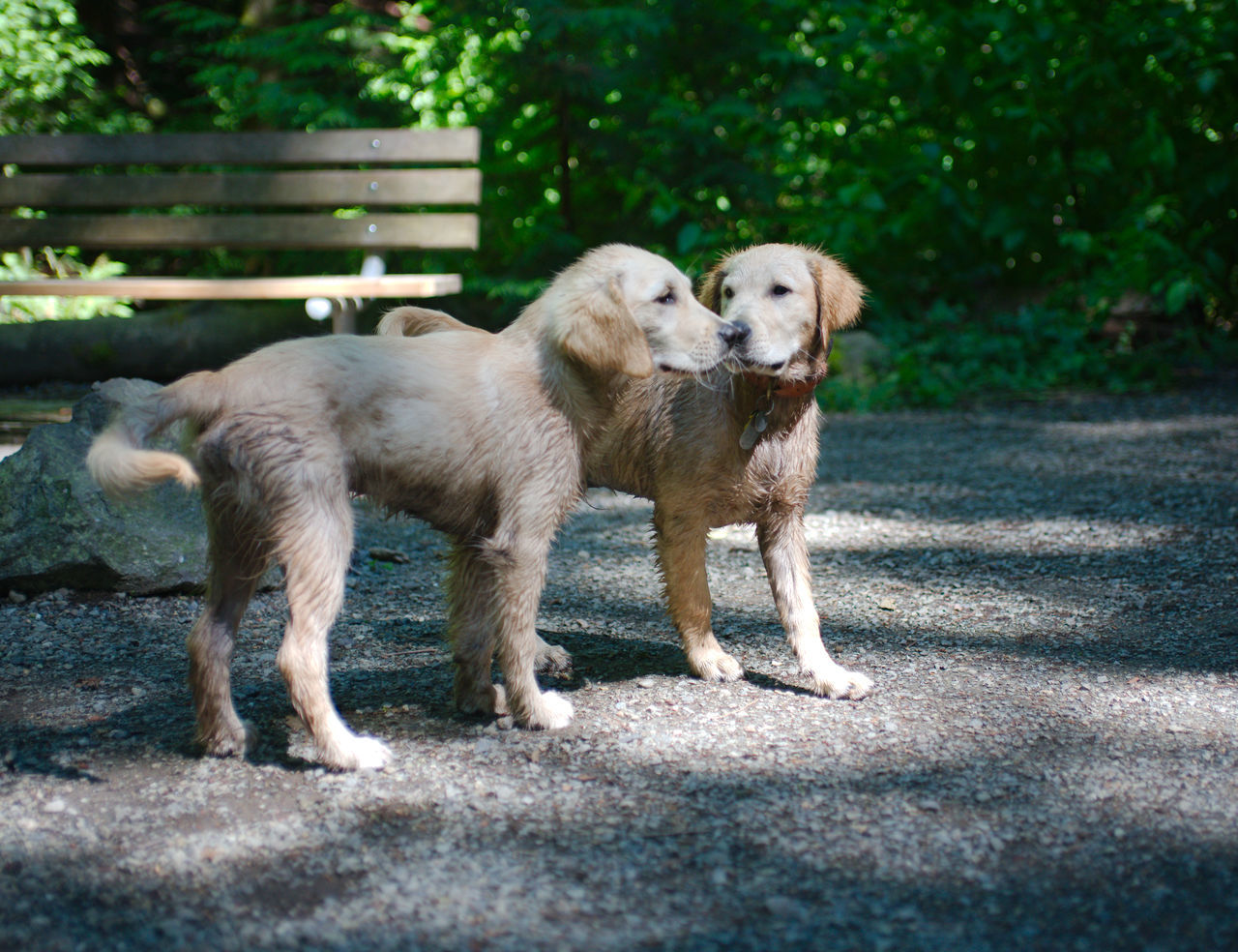 Beautiful stock photos of welpen, animal themes, mammal, dog, domestic animals