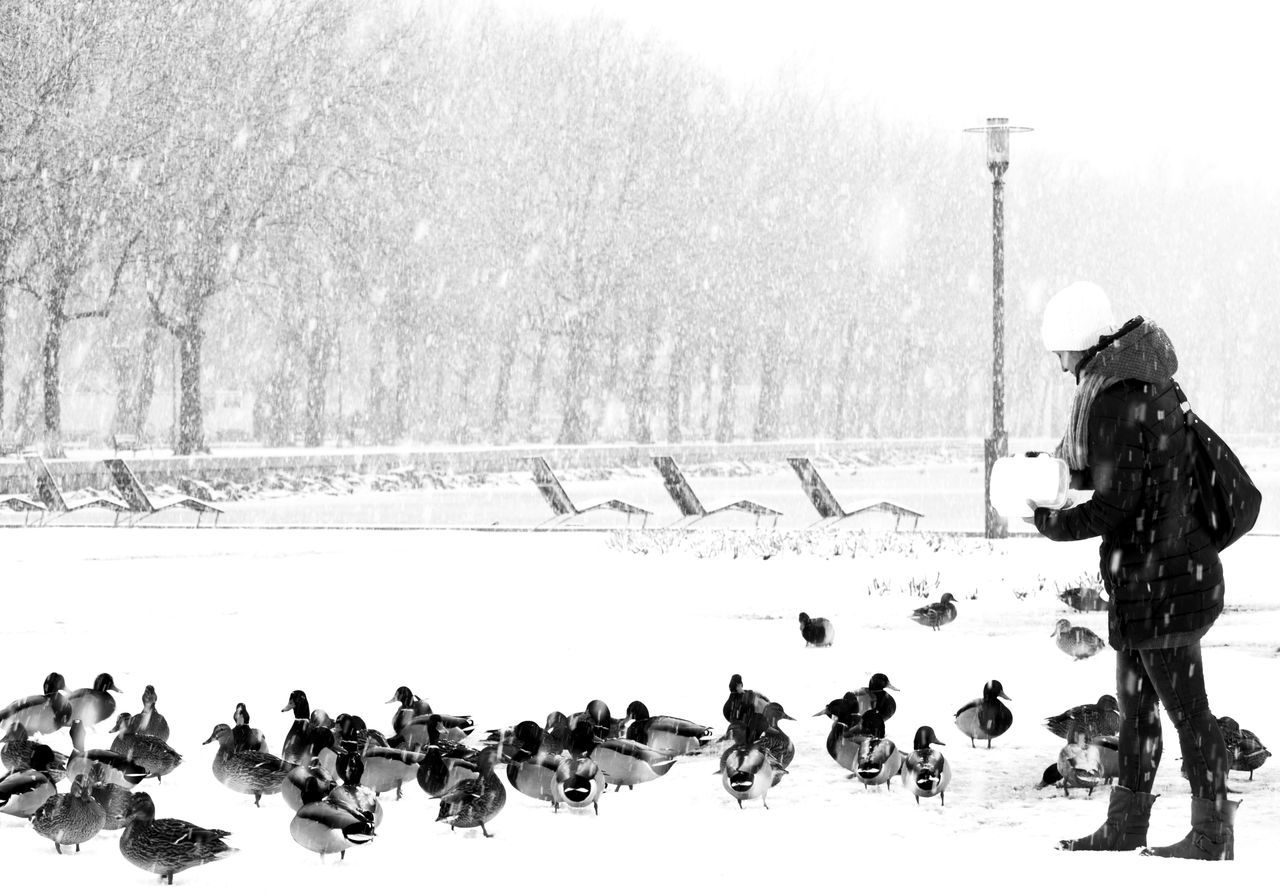 Beautiful stock photos of enten, winter, cold temperature, snow, real people