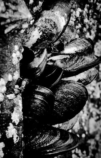 Mussels and limpets Ocean Crustacean Beach Beachphotography Black And White Blackandwhite Photography Cornwall Nature