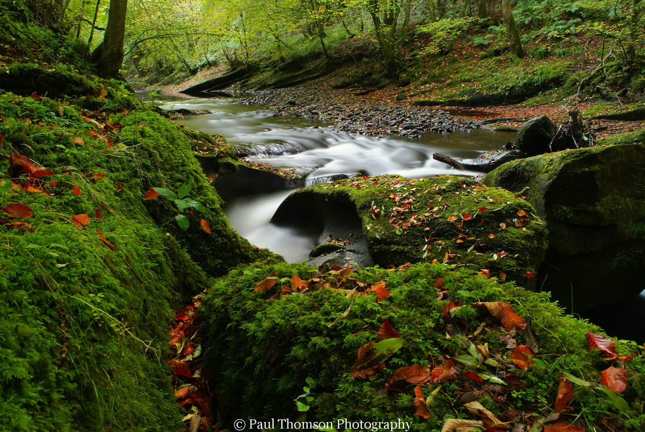 Showcase: November Brampton Autumn🍁🍁🍁 Trees Landscapes Rivers Cumbria Uk Gelt Woods Landscapes Outdoor Woods