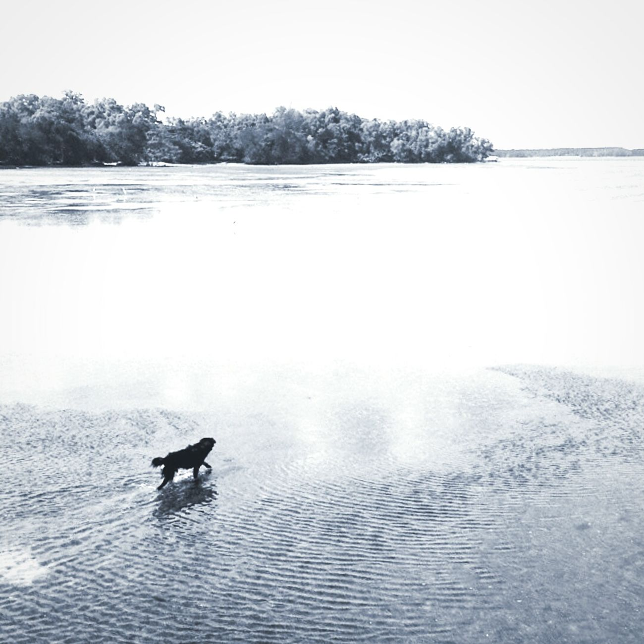 Lonely soul Singapore Monochrome Pulauubin Chekjawa Adventure Dogslife