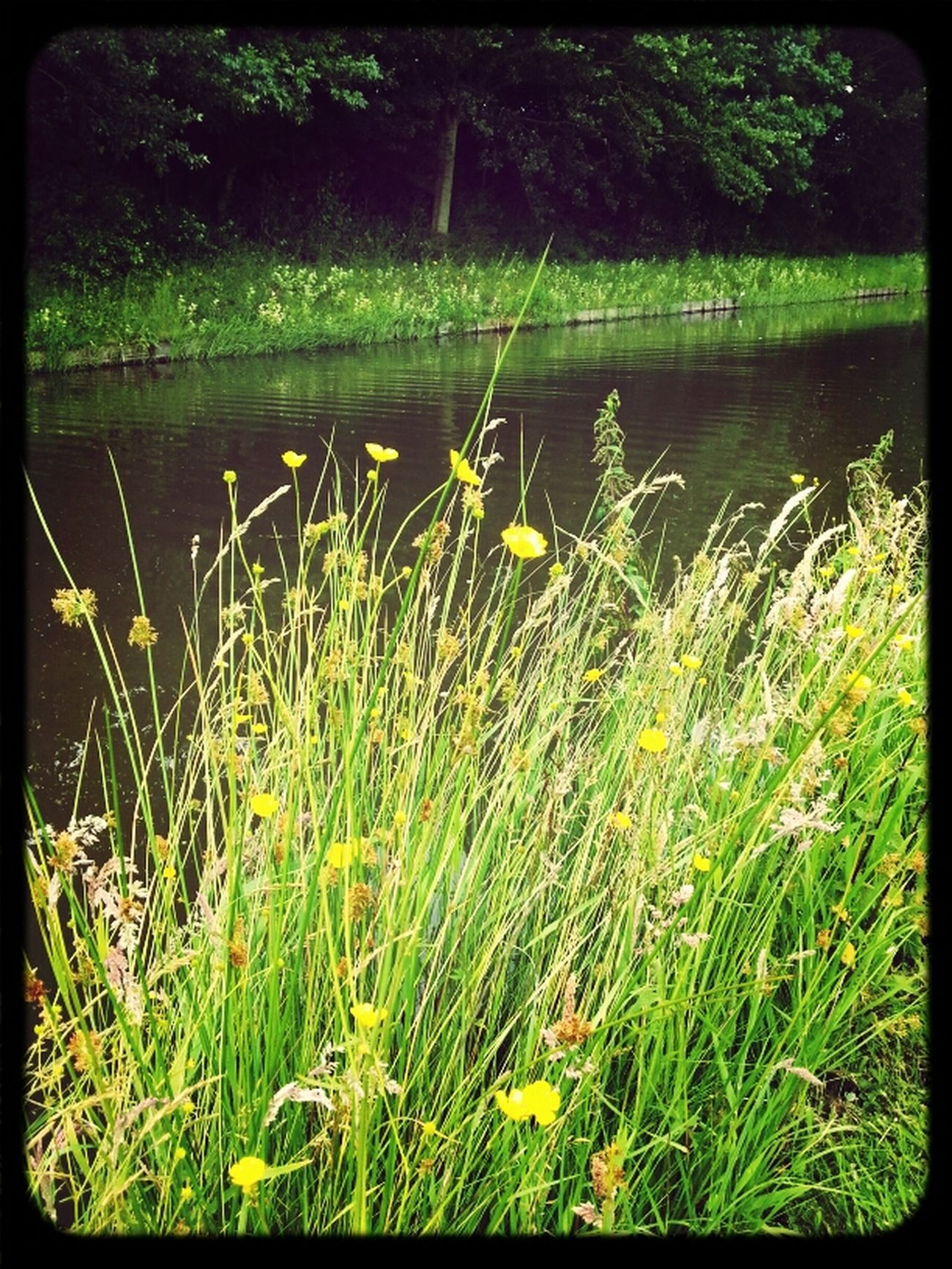 Water Yellow Flower Water_collection Nature_collection